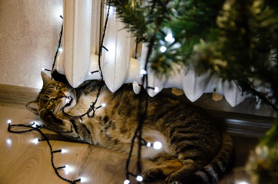 Bokeh, Festive, Decorations, New Year, Led Lights
