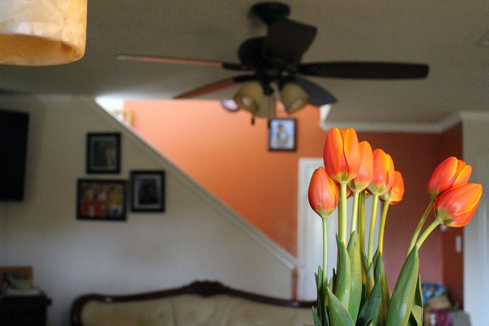 Tulips, Indoors, Decorations, Decorative, Orange