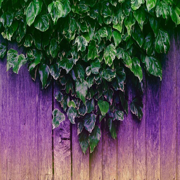 Leaves, Fence, Plant, Nature, Decorative, Outdoors