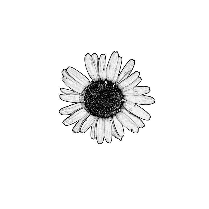 Decoration, Decorative, Design, Drawing, Flora, Floral
