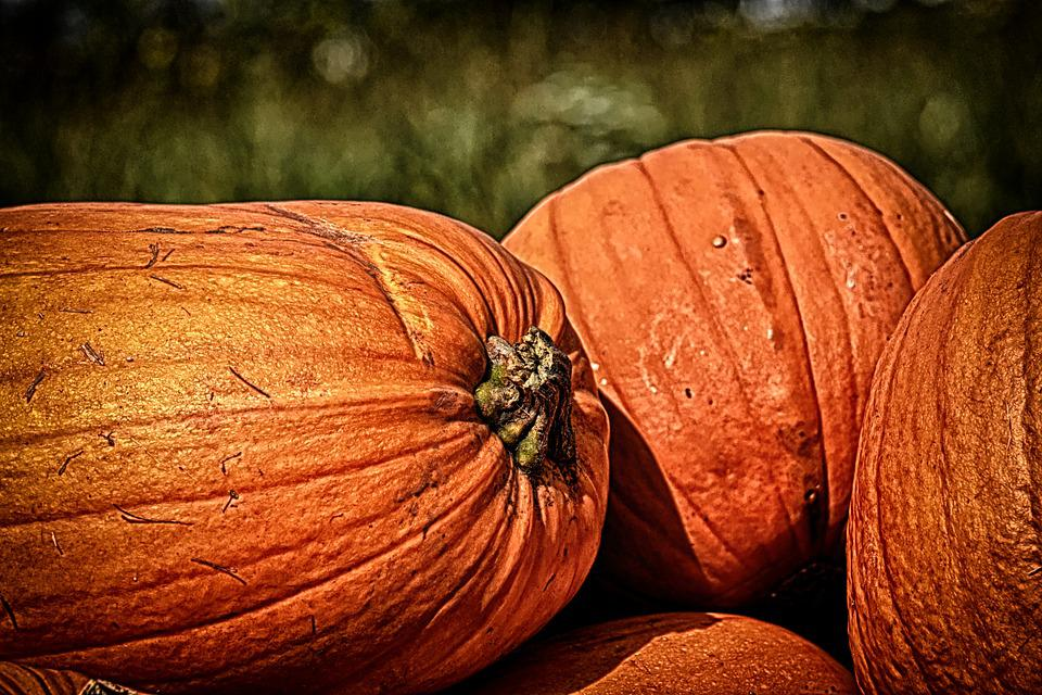 Pumpkins, Autumn, Decoration, Decorative Squashes