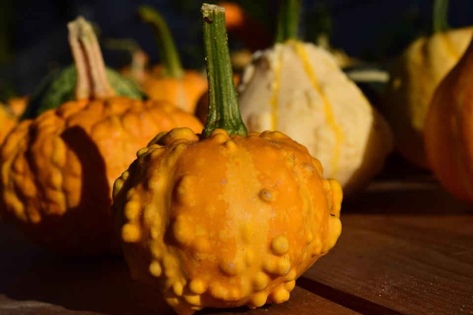 Decorative Squashes, Pumpkins, Yellow, Beautiful
