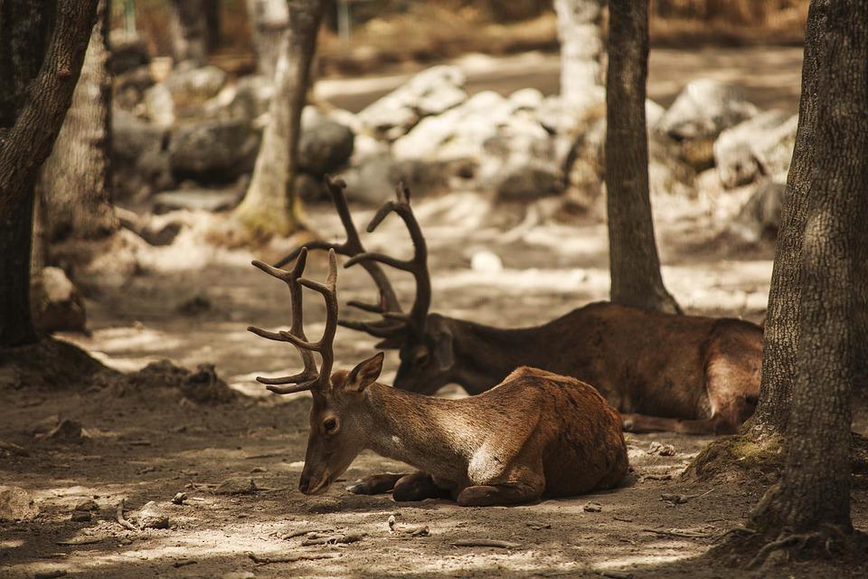 Deer, Lavirian, Dump