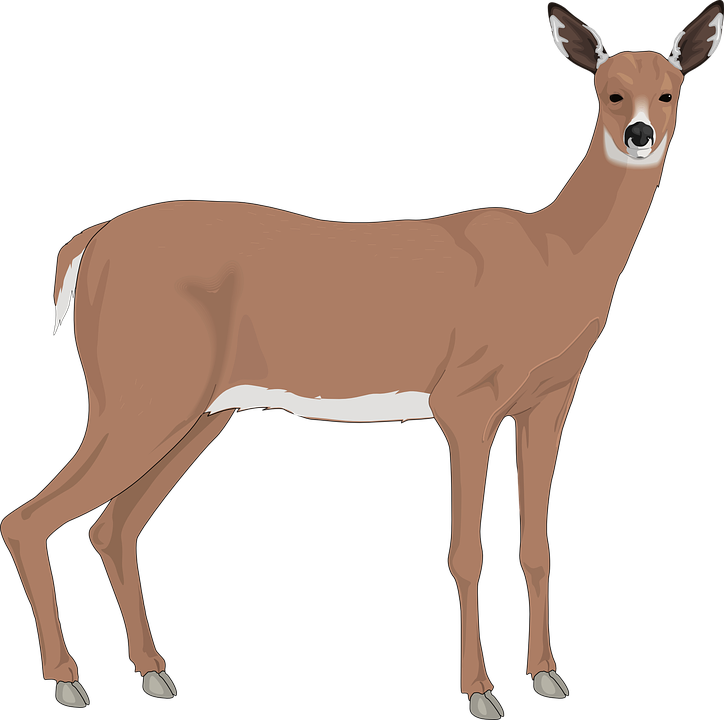 Deer, Animal, Mammal, Wild, Nature, Wildlife