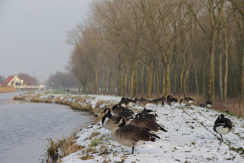 Winter, Delft, Wood, Netherlands