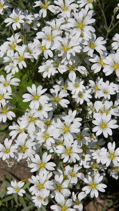 White Flowers, Delicate Flowers, Flower Veil