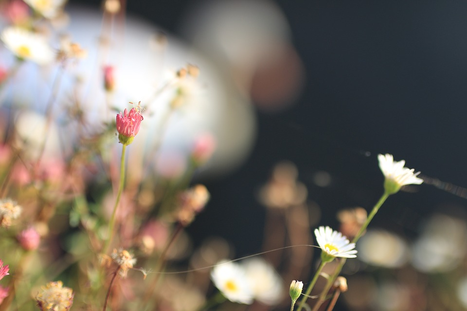 Flower, Swan, Sambre, Delicate