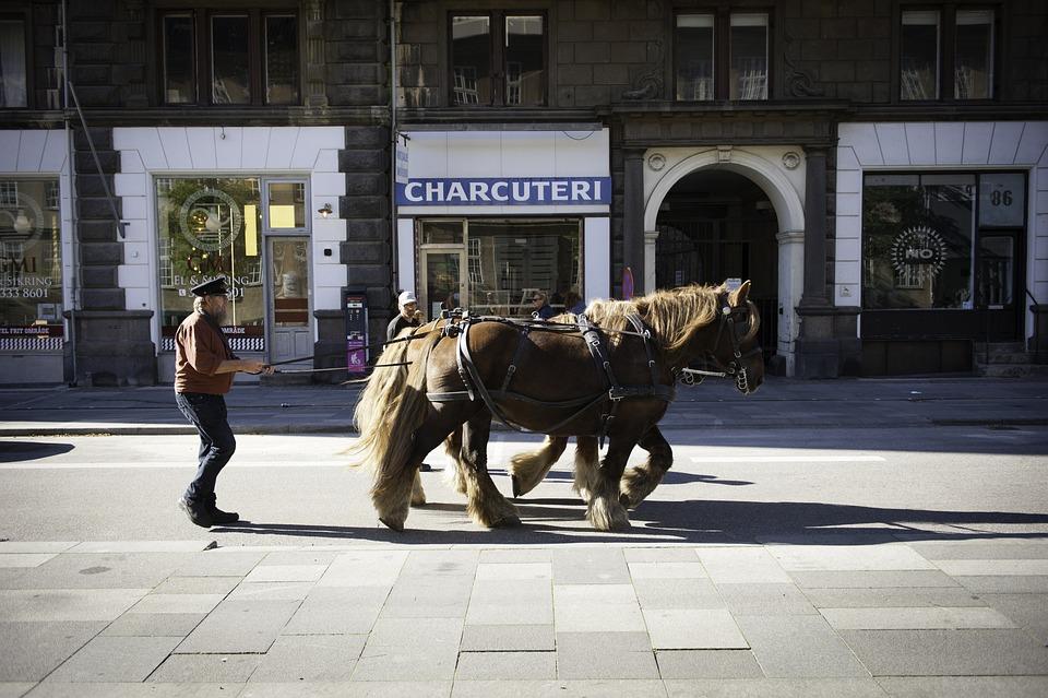 Copenhagen, Horses, Denmark, City, Street