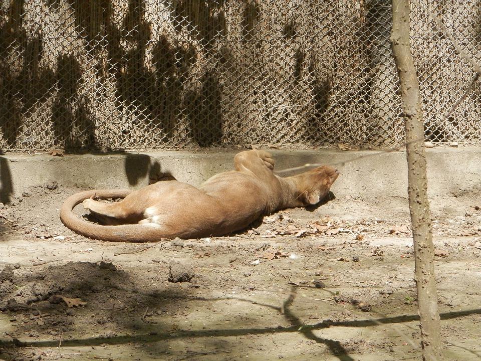 Deprive, Zoo, Lie