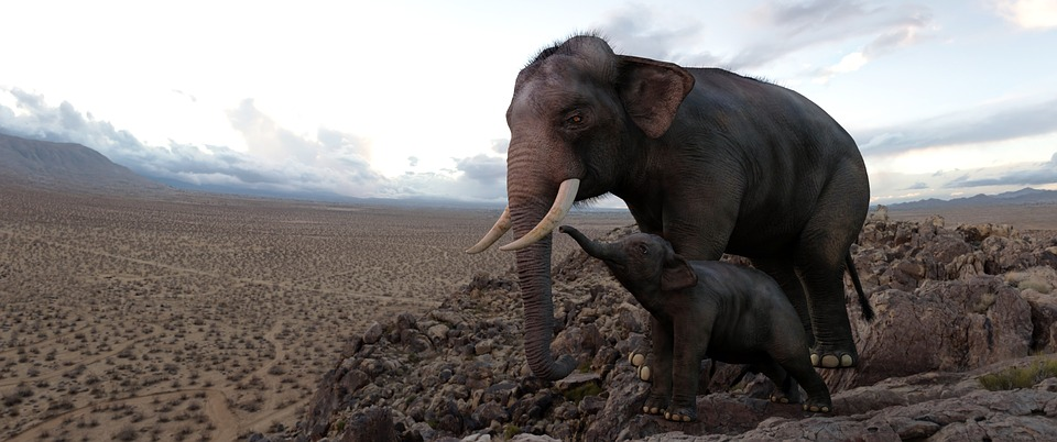 Computer Art, Elephants, Baby Elephant, Desert, Africa