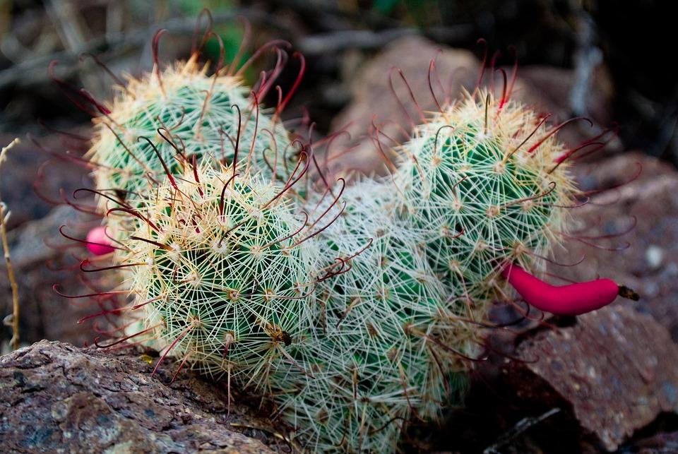 Arizona, Tucson, Desert, Cactus, Landscape, Nature