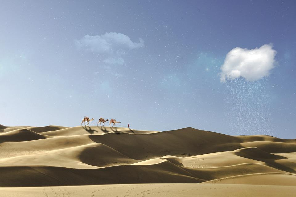Desert, Caravan, Camel