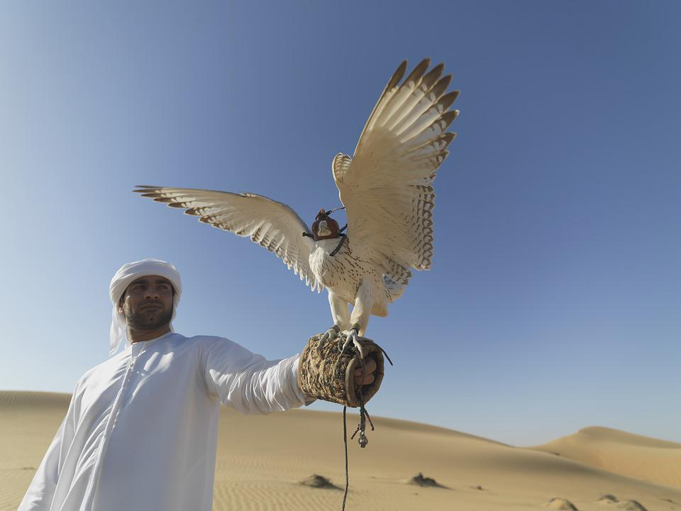 Falcon, Uae, Desert, Hunter, Claws, Falconry, Feathers