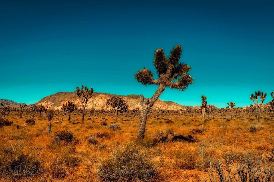 California, Mountains, Desert, Trees, Barren, Hot, Dry