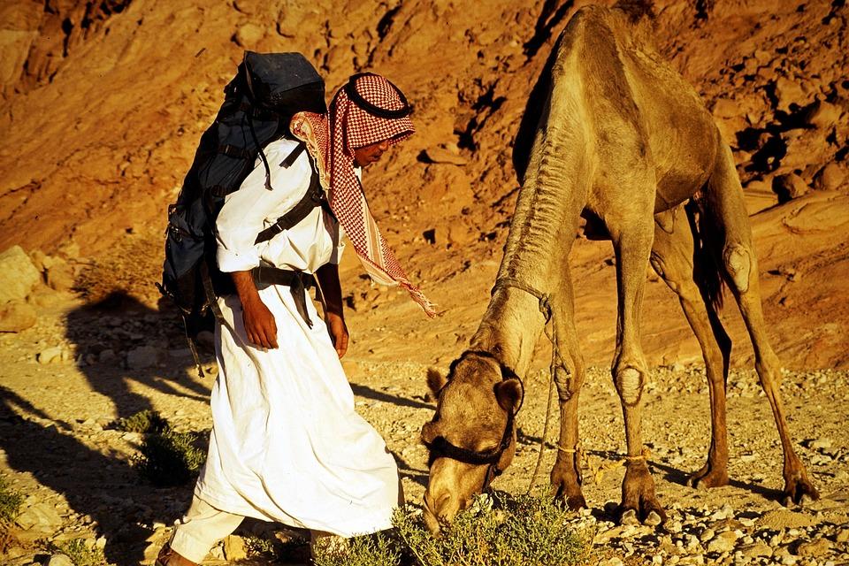 Bedouin, Sinai, Dromedary, Camel, Egypt, Desert