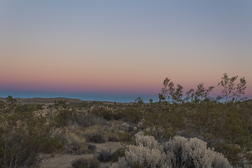 Desert, Sky, Joshua Tree, Gradient, California, Dry