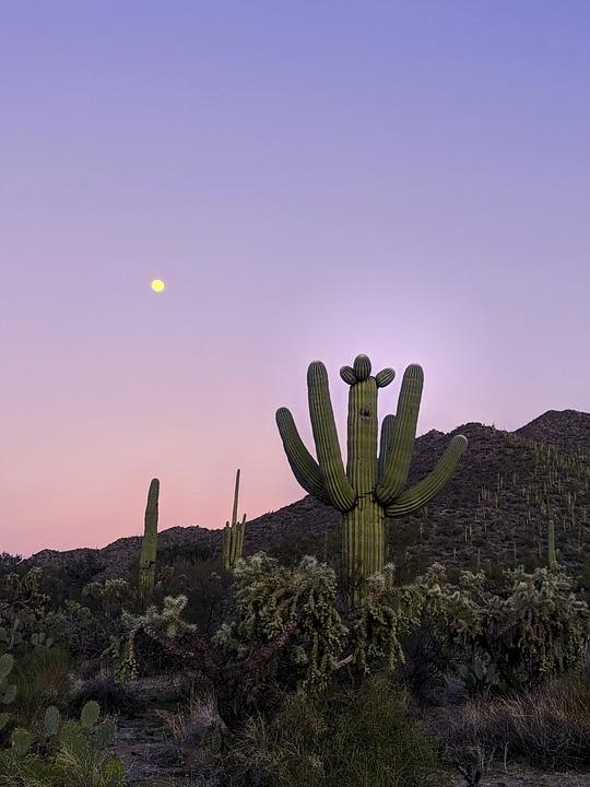 Cactus, Desert, Succulent, Nature, Landscape, Mountains