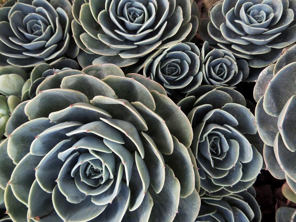 Desert Plant, Cactus, Gross, Green