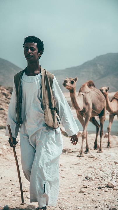 Camel, Desert, Arabia, Oman, Salalah, Dry, Sand, Summer
