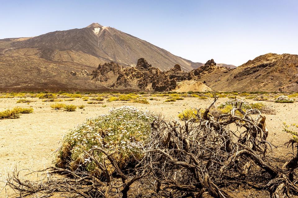 Desert, Tenerife, Cactus, Lava, Away, Nature, Sand