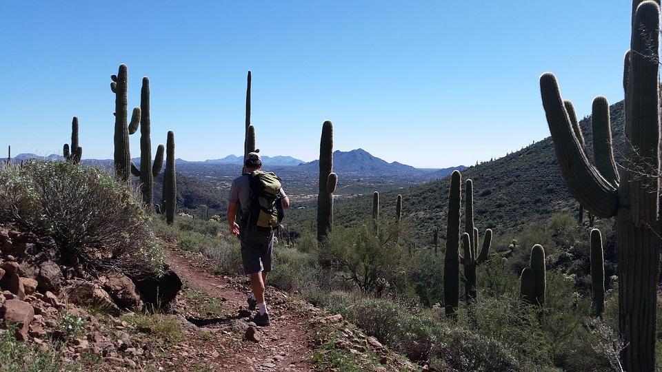 Saguaro Cactus, Cacti, Hiking, Arizona, Desert, Usa