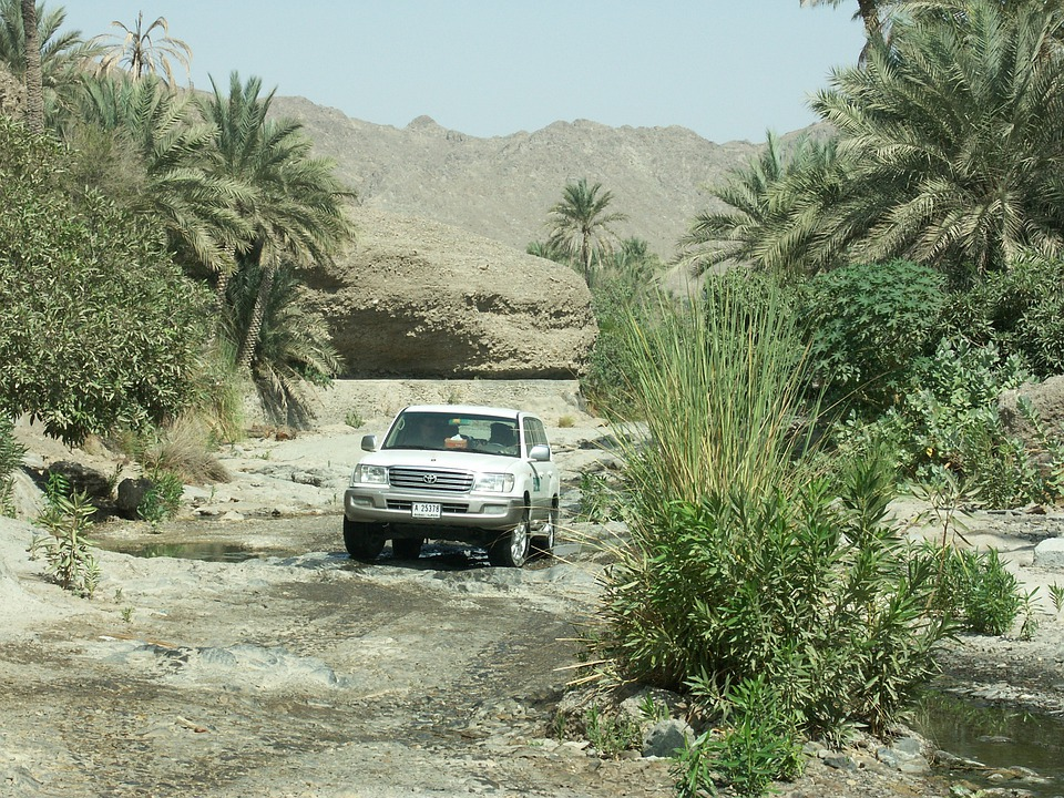 All Terrain Vehicle, Toyota, Desert, Wadi, Palm Trees