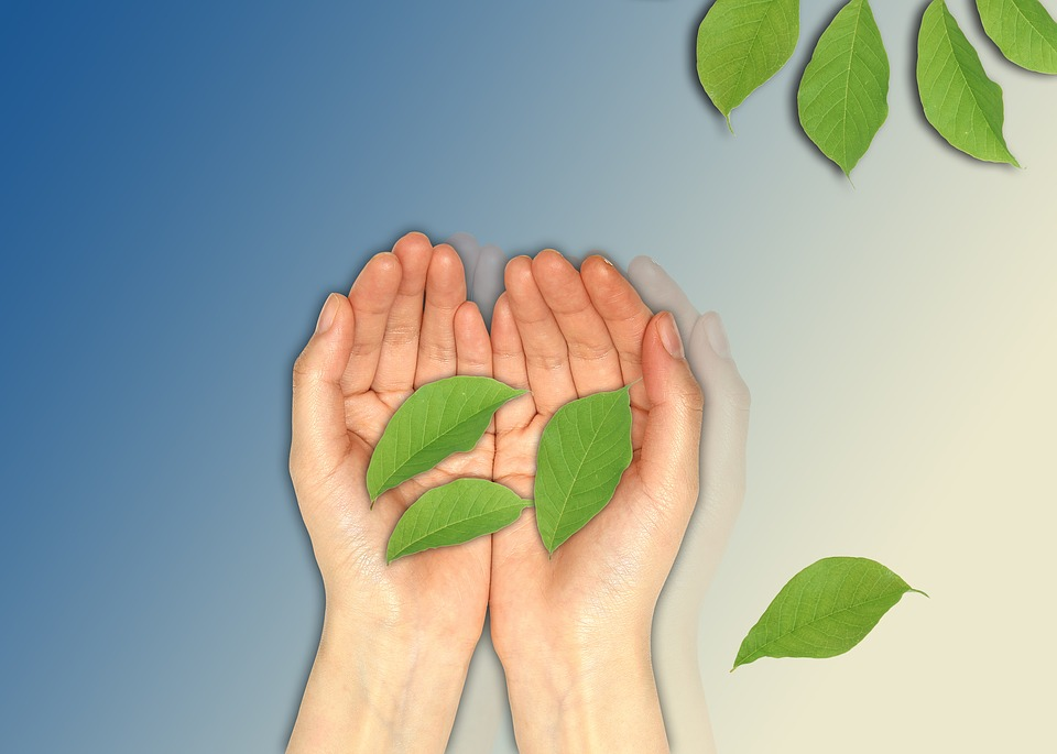 Background, Design, Hands, Green Leaves, Blue, Wishes