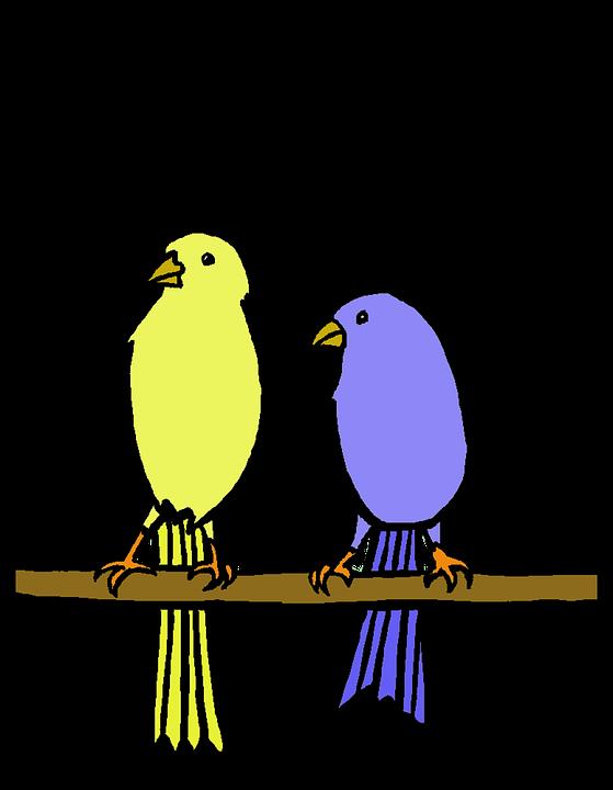 Yellow, Blue, Bird, Birds Cute, Nature, Design, Summer