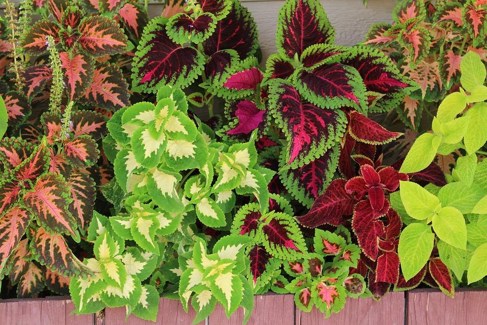 Flower Boxes, Color, Colorful, Box, Flower, Design