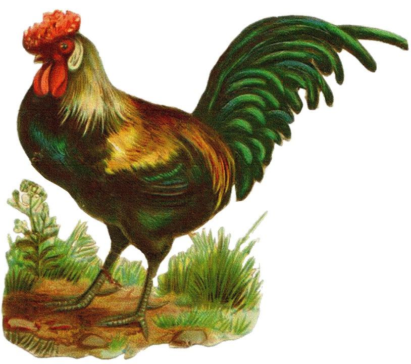 Rooster, Vintage, Drawing, Chicken, Old, Design