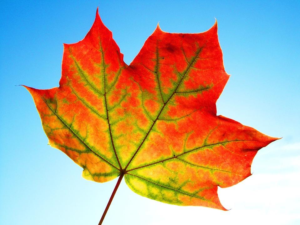 Leaf, Fall, Frame, Texture, Thanksgiving, Design