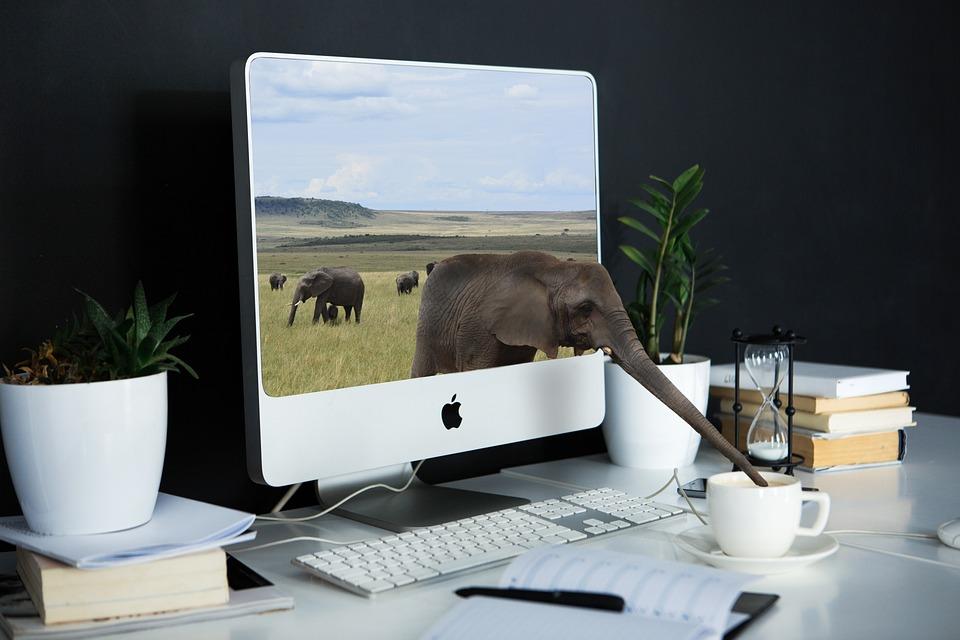Computer, Laptop, Technology, Desk, Office, Composing