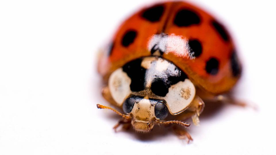 Insect, Biology, Little, Desktop, Nature, Beetle