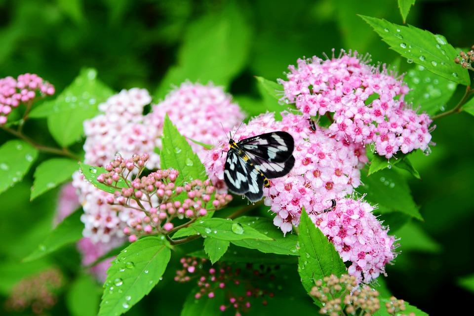 Butterfly, Flower, Desktop