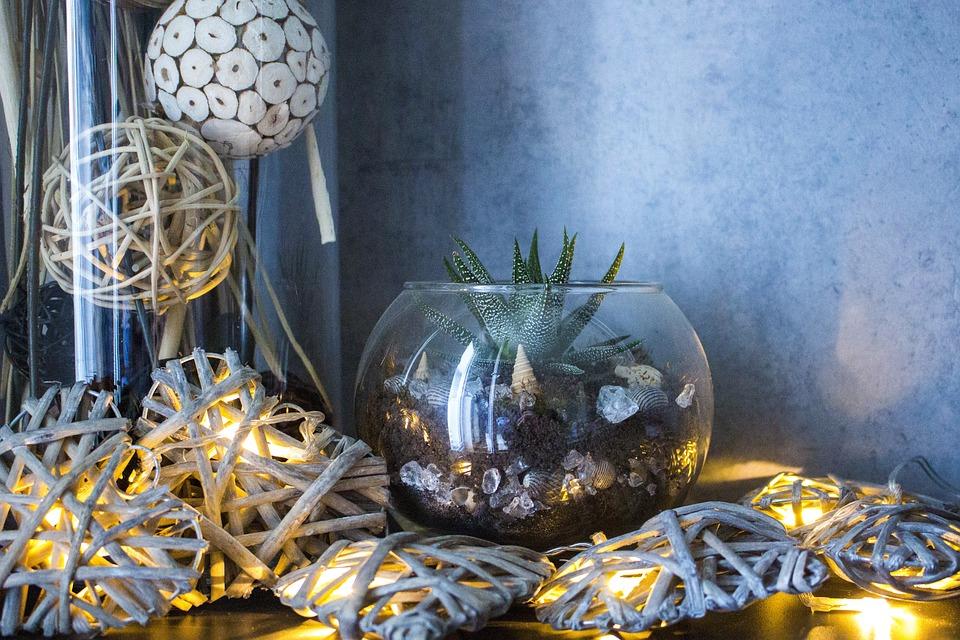 Desktop, Decoration, Celebration, Color, Light, Cactus