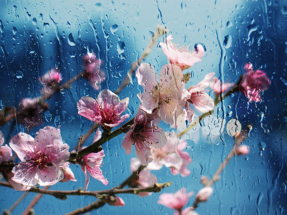 Flower, Almond, Flora, Nature, Desktop, Natural, Bright