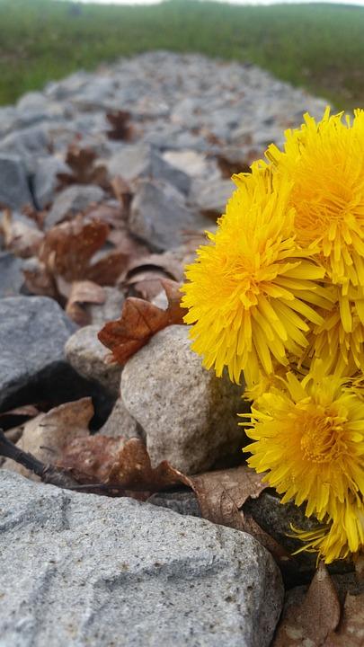 Nature, Flora, Flower, Summer, Outdoors, Park, Desktop