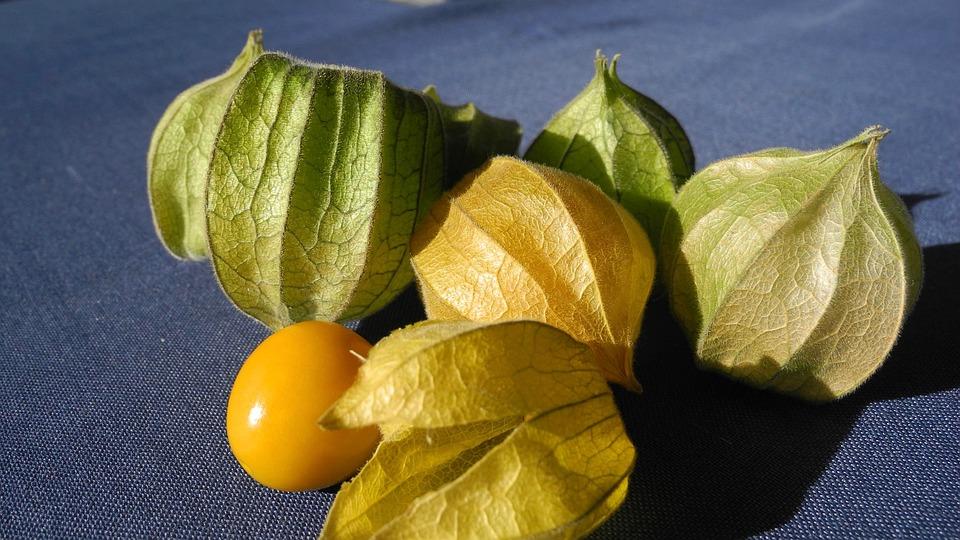 Physalis, Cape Gooseberry, Fruit, Plant, Dessert, Berry