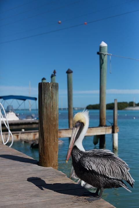 Pelican, Florida, Key West, Sunny, Destinations, Travel