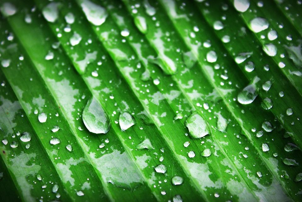 Banana, Beautiful, Botany, Chlorophyll, Closeup, Detail
