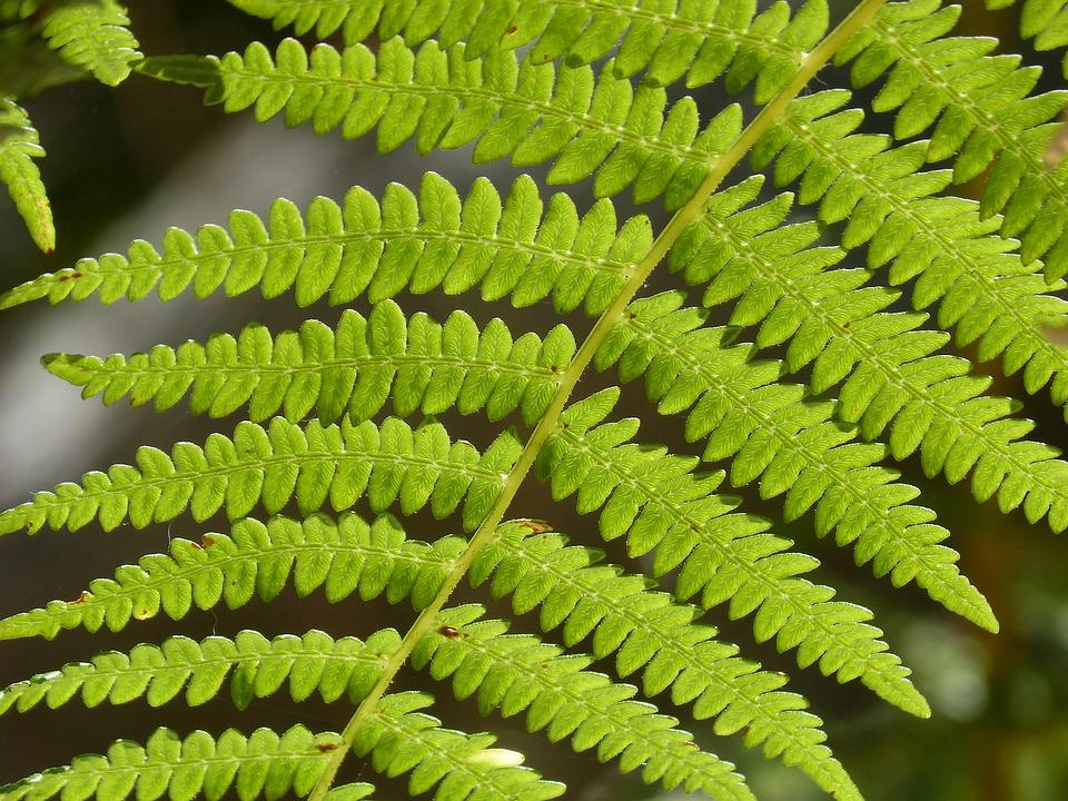 Fern, Leaf, Detail, Green, Texture