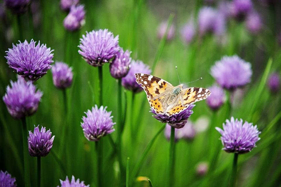 Flower, Detail, Macro, Nature, Plant, Garden, Purple