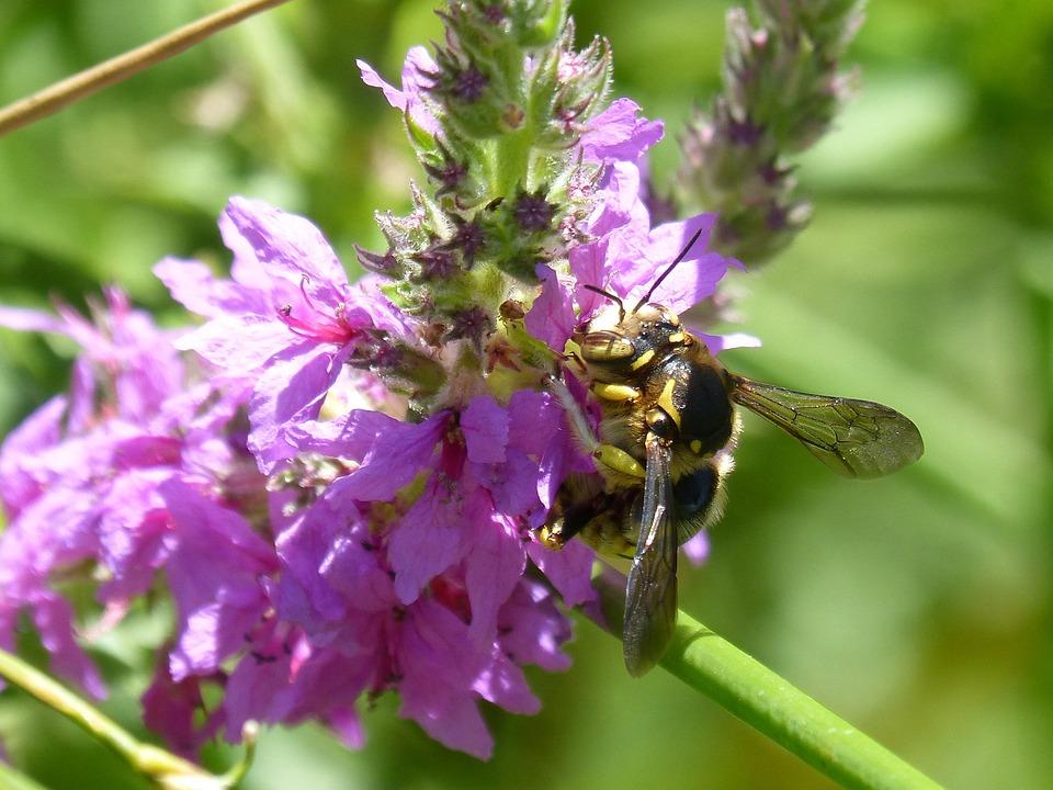 Hornet, Flower, Libar, Greenery, Detail