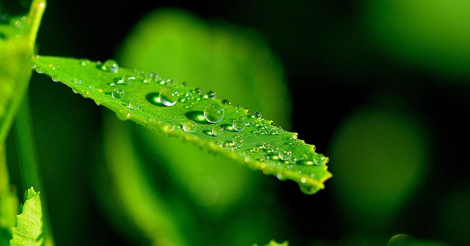 Nature, Leaf, Detail, Drops, Macro