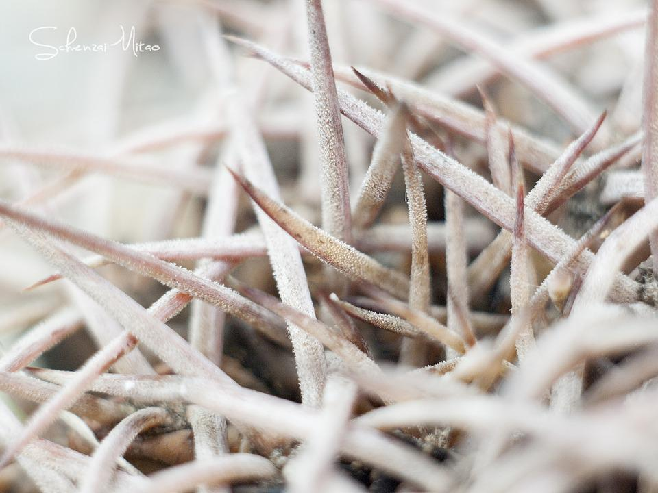 Cactus, White, Light, Morning, Detail, Spines