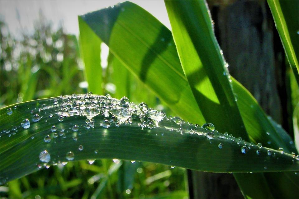 Nature, Grass, Raindrops, Rain, Water, Wet, Dew, Clear