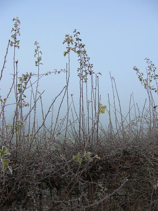 Plants, Dew, Freezing