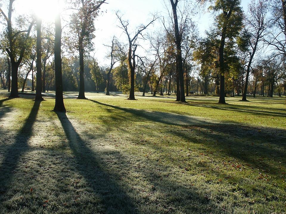 Park, Morning, Dew, Frost, Trees, Autumn, Public