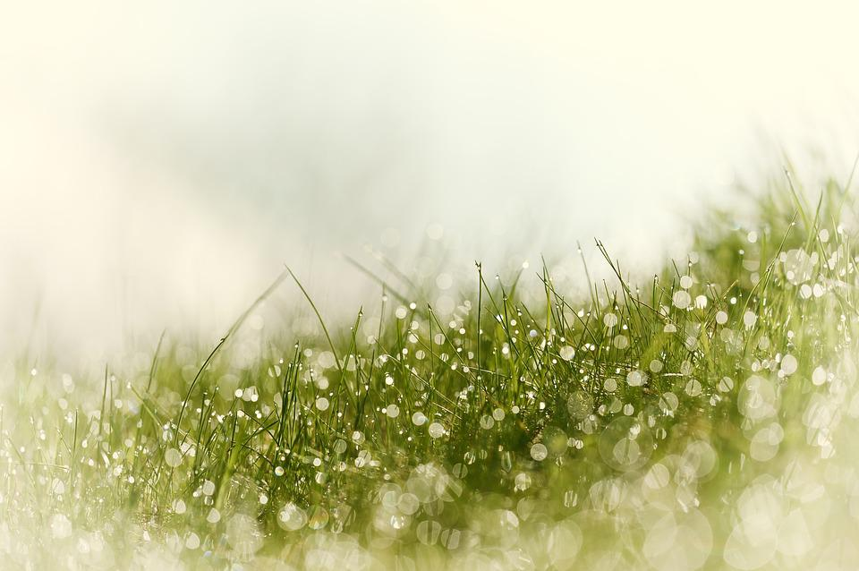 Nature, Grass, Season, Plant, Meadow, Drip, Dewdrop