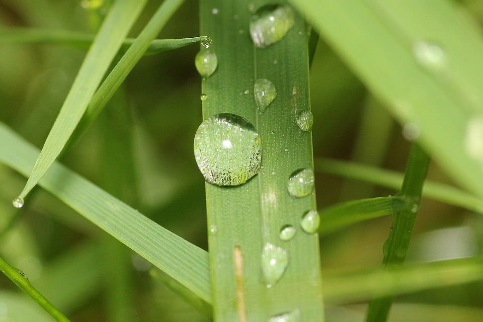 Plant, Drop Of Water, Water, Drip, Dewdrop, Nature
